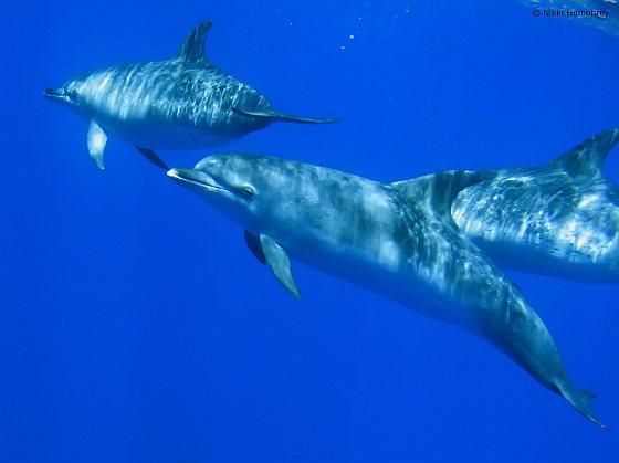 Dolfijnen redden