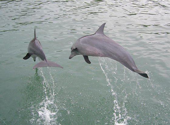 illegaal gevangen dolfijnen
