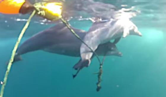 dolfijnenjong