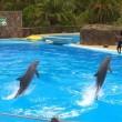 Dolfijnen Dolfinarium van de regen in de drup