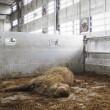 Duizenden dode schapen tijdens transport naar Azië