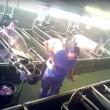 Varkenshouder slaat biggetjes dood tegen de grond (video)