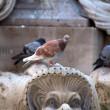 Dieren die slimmer zijn dan mensen