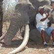 Duitse jager doodt grootste olifant ter wereld