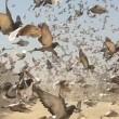 PETA USA onthult allereerste onderzoek naar de geheime wereld van de duivensport in Engeland