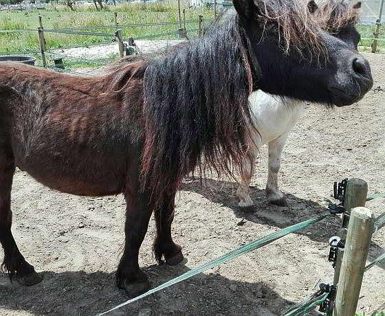 Dumpy afgelopen zomer bij Ponypark Galecop