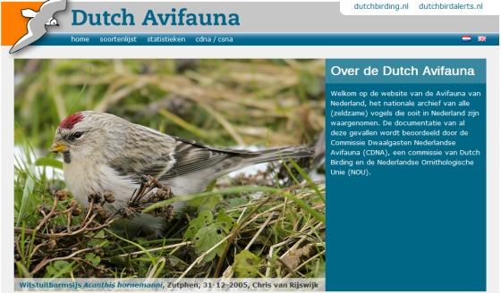 Dutch Avifauna