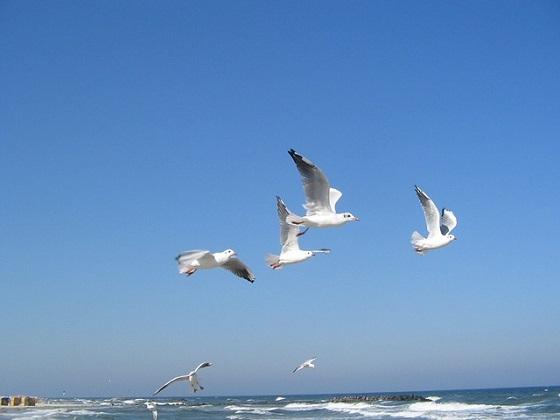 vogelkolonies