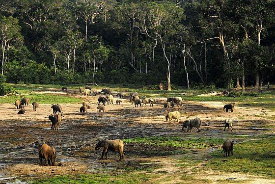 Dzanga-Bai - 26 olifanten