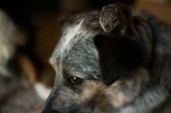 Eekhoorn en hond
