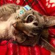 #GNvdD: Vrouw ziet ware schoonheid in eenogige kat