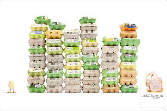 legkip eieren