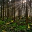 Europese bossen