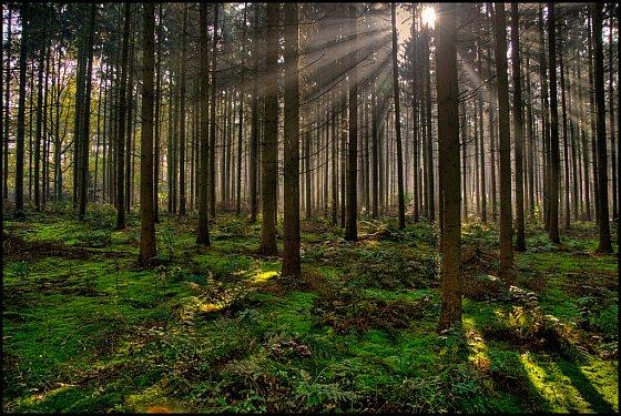 Europese bossen - koolstofdioxide