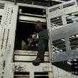 Schokkend veel misstanden bij veetransporten Nederland