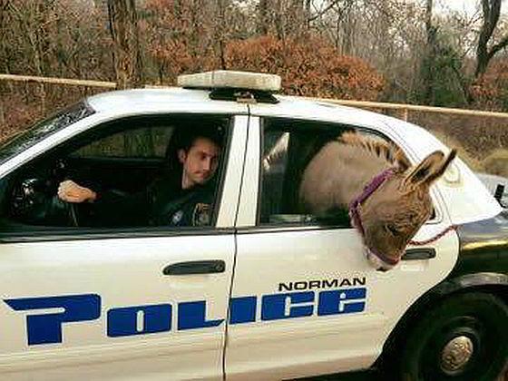 Ezel krijgt lift van politieagent