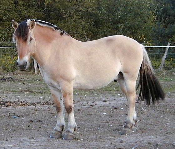 Fjordenpaard - paardenpaspoorten