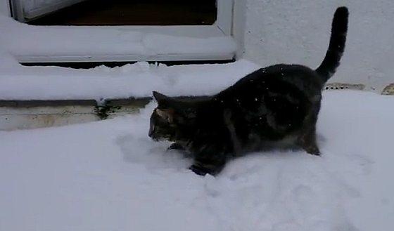 Fletcher - sneeuw - katje