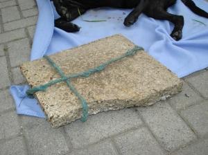 Verdronken hond Bergschenhoek