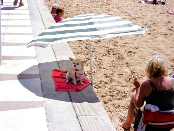 fotowedstrijd hond anita willemsen