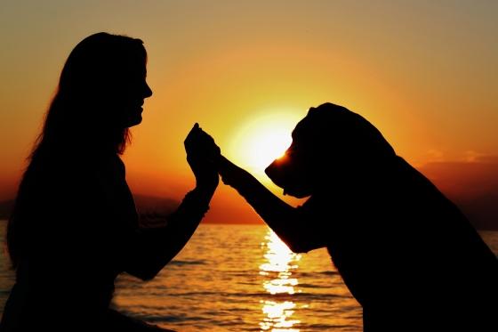 fotowedstrijd Bowie hond hondenmens