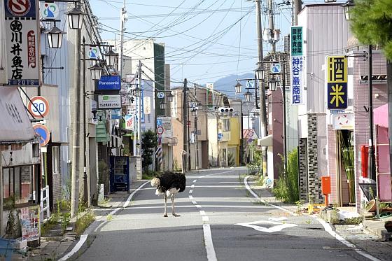 De achtergelaten dieren van Fukushima