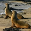 Galapagos zeeleeuwen eerder ziek door blootstelling aan mensen