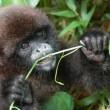 IUCN NL en Apenheul beschermen Peruaanse apen