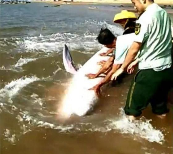 gestrande walvis