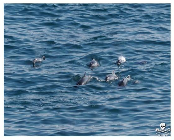 dolfijnenjacht