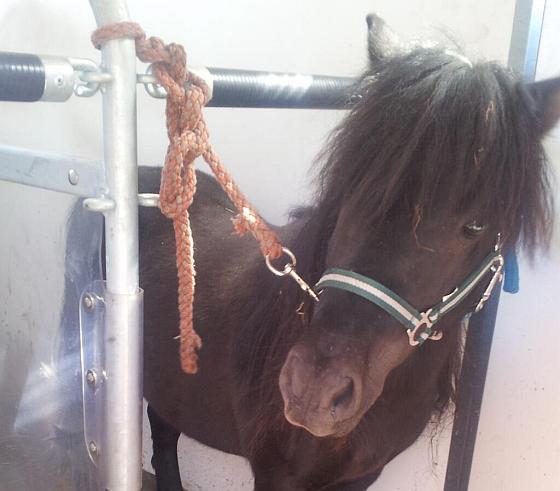 Gevonden pony