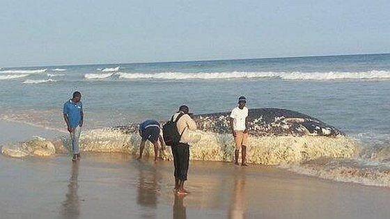 Walvissen Ghana