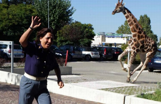 giraffe ontvlucht circus
