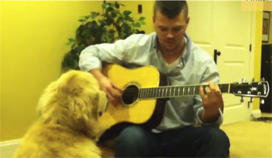 Golden loves guitar