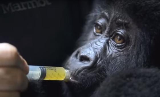 gorilladokters