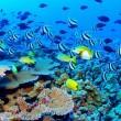 Zeereservaten bieden te weinig bescherming voor zeeleven