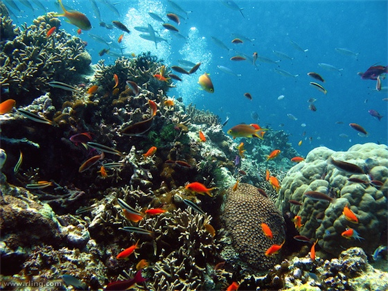 Great Barrier Reef - monitoring