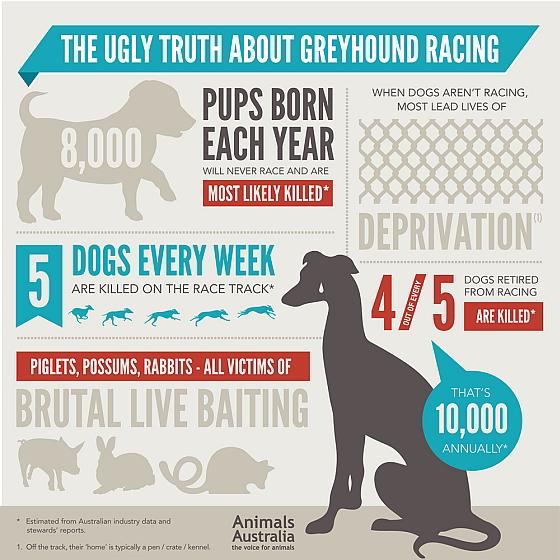 Geyhounds - infographic
