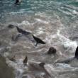 Erwin Vermeulen: De derde maand van het dolfijnenjachtseizoen in Taiji