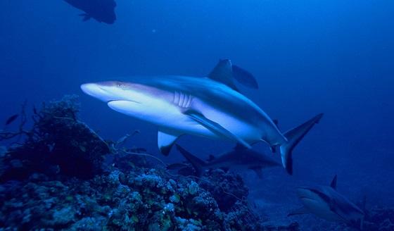 miljoenen haaien