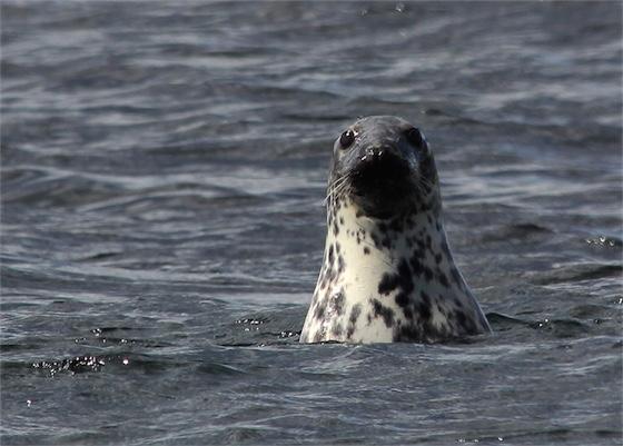 zeehondenopvang