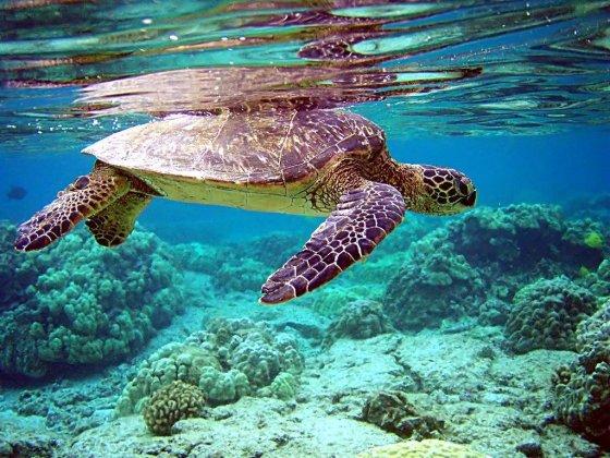 schildpadsmokkelaars