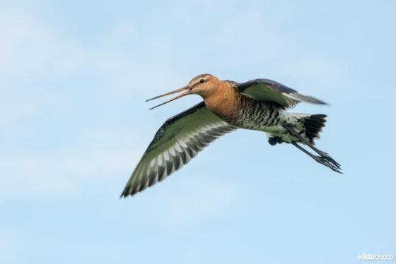 bedreigde vogels