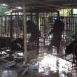 Chinese wetenschappers willen berengal-boerderijen verbieden