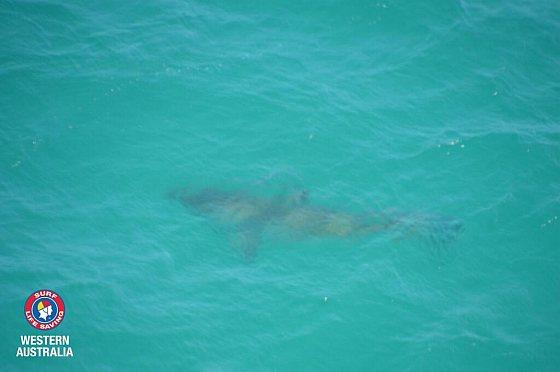 Haai - haaienvallen