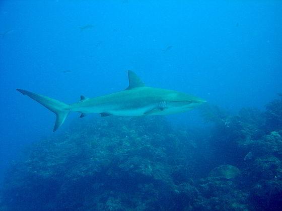 haai - vervolging