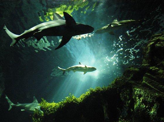 indrukwekkende haaien