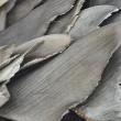 Chinese luchtvaartmaatschappij vervoert geen haaienvinnen meer