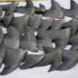 Actie voor verbod op haaienvinnen Toronto nieuw leven ingeblazen (petitie)