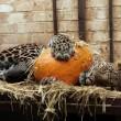 Halloween voor Friese leeuwen en tijgers